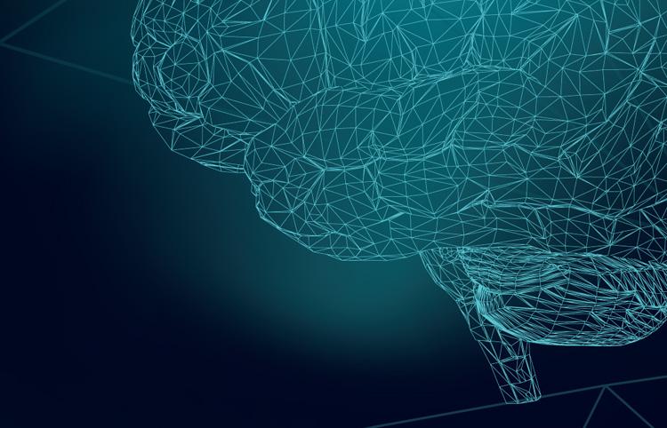Neurociència: <span class='nostrong'>desvetllant els misteris del cervell</span>